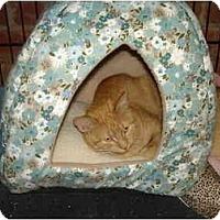 Adopt A Pet :: Phoebe - Chesapeake, VA