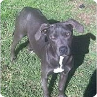 Adopt A Pet :: Silver - Geismar, LA