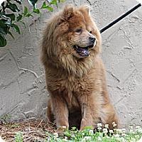 Adopt A Pet :: Chase - Tucker, GA