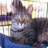 Adopt A Pet :: Little Lucy B - Sacramento, CA