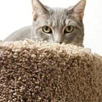 Adopt A Pet :: Grace - Orland, CA