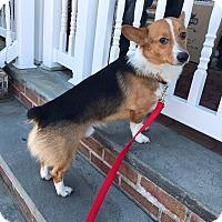 Adopt A Pet :: Ryder - Freeport, NY