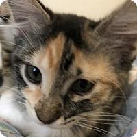 Adopt A Pet :: Poptart - North Highlands, CA
