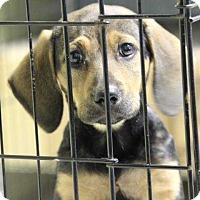 Adopt A Pet :: Mazie (Has Application) - Washington, DC
