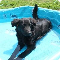 Adopt A Pet :: Zander - Salem, NH