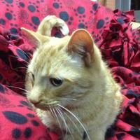 Adopt A Pet :: Gingerale - Salem, OH