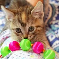 Adopt A Pet :: Bunny 04-22-17 - Bulverde, TX