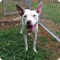 Terrier (Unknown Type, Medium) Mix Dog for adoption in Nashville, Tennessee - Tildy