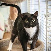 Adopt A Pet :: Tuxie - Margate, FL