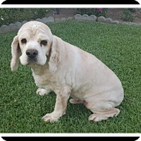 Adopt A Pet :: DWIGHT - Winchester, CA