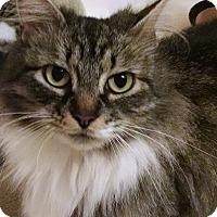 Adopt A Pet :: Molly - Morganton, NC