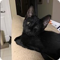 Adopt A Pet :: Candi - Fayetteville, GA