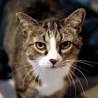 Adopt A Pet :: Buttons - Bealeton, VA