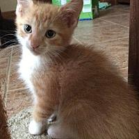 Adopt A Pet :: George Washington - Maywood, IL