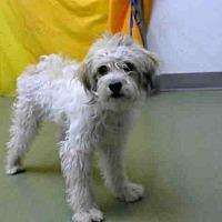 Adopt A Pet :: URGENT on 8/21@DEVORE San Bern - San Bernardino, CA