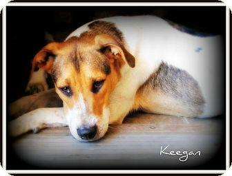 Beagle Mix Dog for adoption in Pascagoula, Mississippi - Keegan