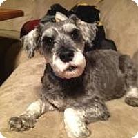 Adopt A Pet :: Joey - North Benton, OH