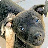 Adopt A Pet :: Baby Nora - Oakley, CA