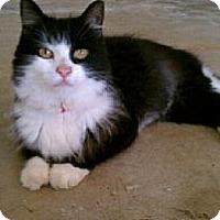Adopt A Pet :: Desiree - Ft. Lauderdale, FL