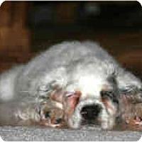 Adopt A Pet :: Magic - Mesa, AZ
