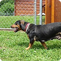 Adopt A Pet :: Coco - Afton, TN