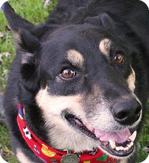 Husky/German Shepherd Dog Mix Dog for adoption in New Freedom, Pennsylvania - Smokey