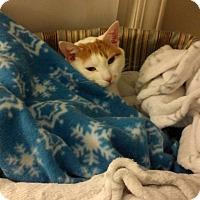 Adopt A Pet :: Joey - Monroe, NC