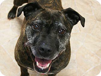 Pit Bull Terrier Mix Dog for adoption in Republic, Washington - Tisch