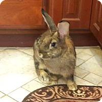 Adopt A Pet :: Gucci - Hazlet, NJ