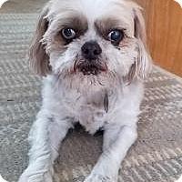Adopt A Pet :: Lyric - Salt Lake City, UT