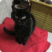 Adopt A Pet :: Marvin -$75 Senior fee - Warren, MI