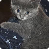 Adopt A Pet :: Galina - Mississauga, Ontario, ON