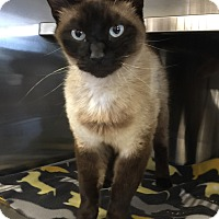 Adopt A Pet :: Griffin - Oakdale, CA