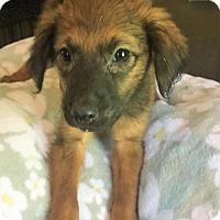 Adopt A Pet :: Xena - Buffalo, NY