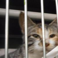 Adopt A Pet :: tif - Opelousas, LA