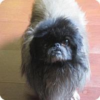 Adopt A Pet :: Mason - Oakdale, TN