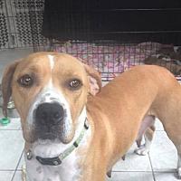 Adopt A Pet :: Graycee - Germantown, OH