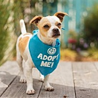 Adopt A Pet :: Niko - Pacific Grove, CA