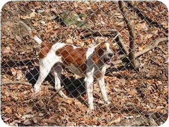Hound (Unknown Type)/Spaniel (Unknown Type) Mix Dog for adoption in Ellijay, Georgia - Nick