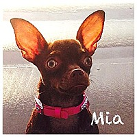 Adopt A Pet :: Mia - Beverly Hills, CA