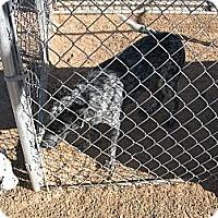 Adopt A Pet :: Sam - Phoenix, AZ