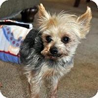 Adopt A Pet :: Pippin - Bettendorf, IA