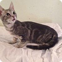 Adopt A Pet :: Ginny - Cocoa, FL