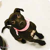 Adopt A Pet :: Zoey - Muldrow, OK
