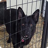 Adopt A Pet :: IZZY - Chewelah, WA