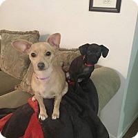 Adopt A Pet :: Buttercup - Ogden, UT