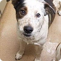 Adopt A Pet :: Thumbelina #168198 - Apple Valley, CA