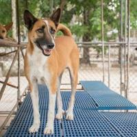 Adopt A Pet :: Jane - Fairfax Station, VA