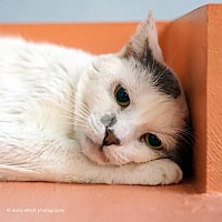 Adopt A Pet :: Burnie - Tucson, AZ