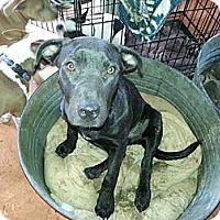 Adopt A Pet :: Simone - New orleans, LA